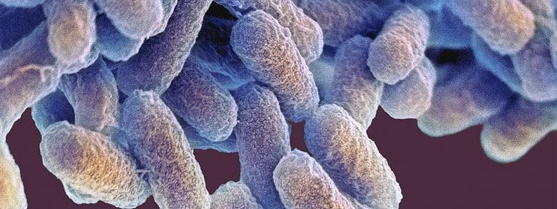 E-coli bakterier